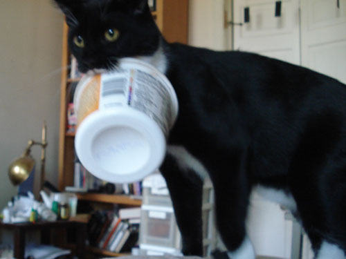 black and white cat carrying pudding tub